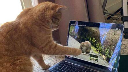 История о рыжем коте, который любит смотреть видео