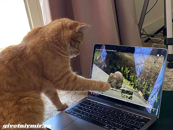 История-о-рыжем-коте-который-любит-смотреть-видео-3