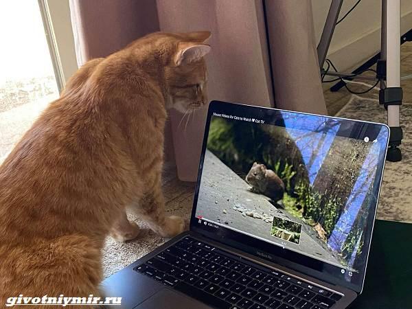 История-о-рыжем-коте-который-любит-смотреть-видео-4