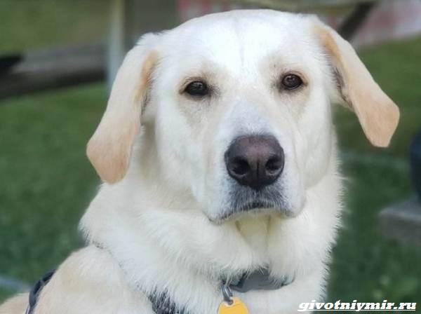 История-о-собаке-которую-удалось-спасти-от-эвтаназии-1