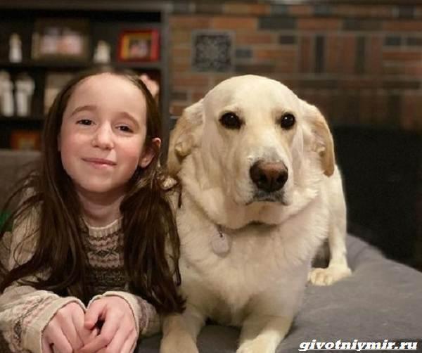История-о-собаке-которую-удалось-спасти-от-эвтаназии-2