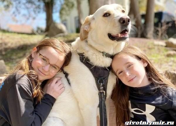 История-о-собаке-которую-удалось-спасти-от-эвтаназии-3