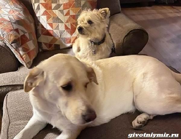 История-о-собаке-которую-удалось-спасти-от-эвтаназии-4