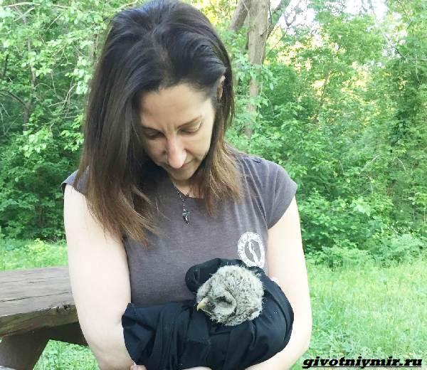 Две-истории-о-чудесном-спасении-малышей-енотов-и-крохотной-совы-5