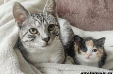История о кошке, которая помогла бездомному котёнку