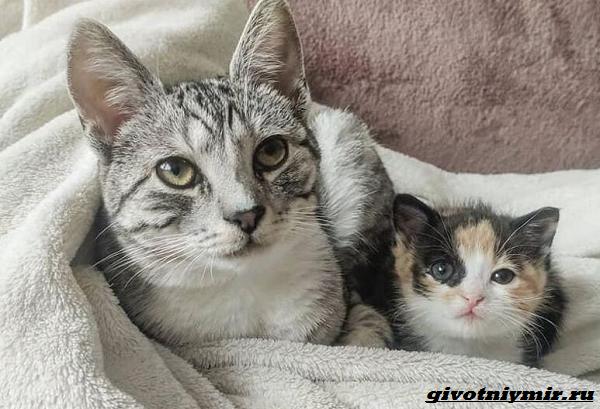 История-о-кошке-которая-помогла-бездомному-котёнку-1