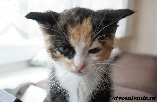 История-о-кошке-которая-помогла-бездомному-котёнку-2