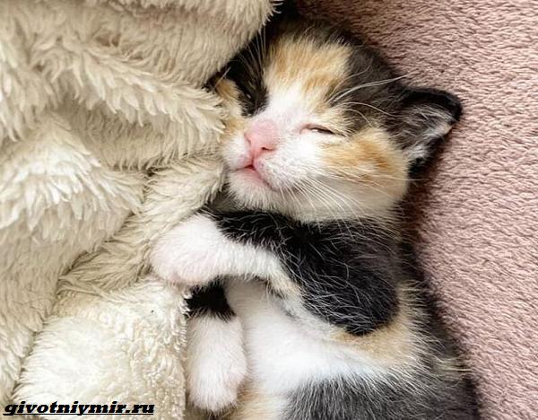 История-о-кошке-которая-помогла-бездомному-котёнку-3