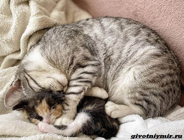 История-о-кошке-которая-помогла-бездомному-котёнку-5