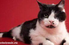 История о коте, которого по ошибке похоронили, а он выжил