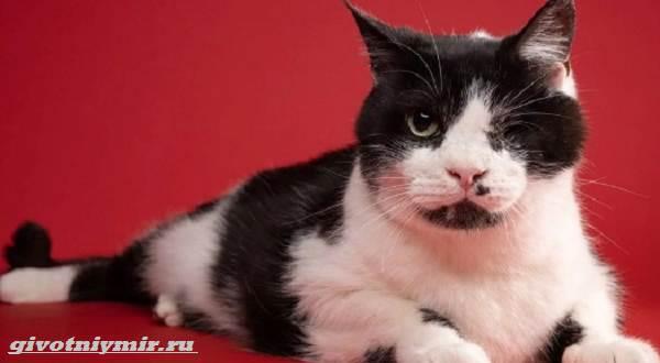 История-о-коте-которого-по-ошибке-похоронили-а-он-выжил-1