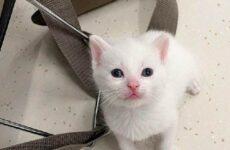 История о крохотном котёнке, который заменил хозяйке погибшего питомца
