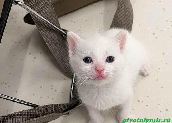 История-о-крохотном-котёнке-который-заменил-хозяйке-погибшего-питомца-1