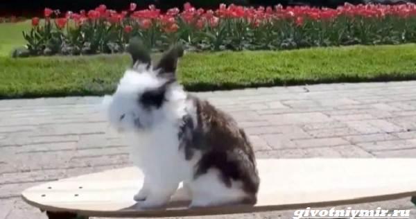 История-о-кролике-который-очень-любит-кататься-на-скейтборде-2