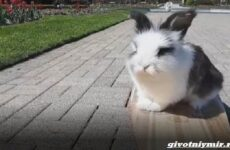 История о кролике, который очень любит кататься на скейтборде