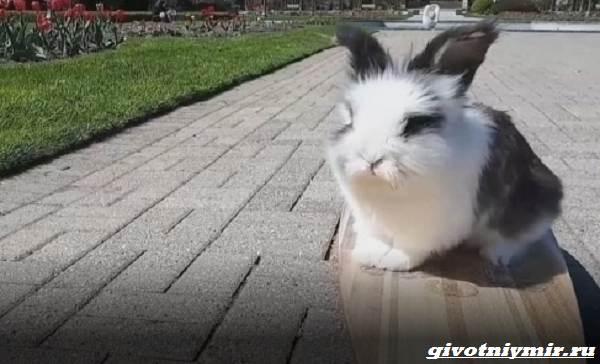 История-о-кролике-который-очень-любит-кататься-на-скейтборде-3