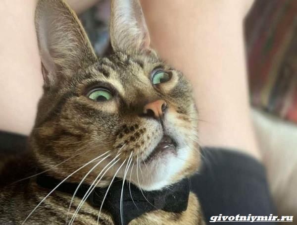 История-о-полосатом-коте-который-удивительно-похож-на-кролика-3