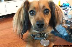 История о собаке, которая не устает радоваться подарку