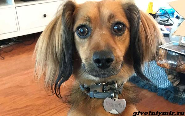 История-о-собаке-которая-не-устает-радоваться-подарку-1