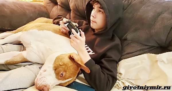 История-о-собаке-которая-помогла-спасти-подростка-2