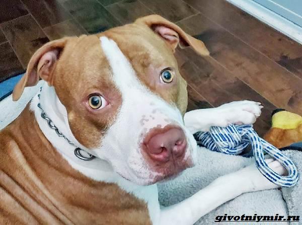 История-о-собаке-которая-помогла-спасти-подростка-3