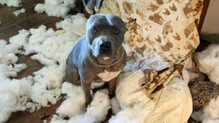 История о собаке, которая после ухода хозяев устроила в доме погром