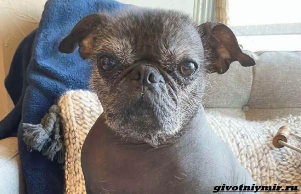История-о-забавной-собаке-на-теле-которой-нет-шерсти-2