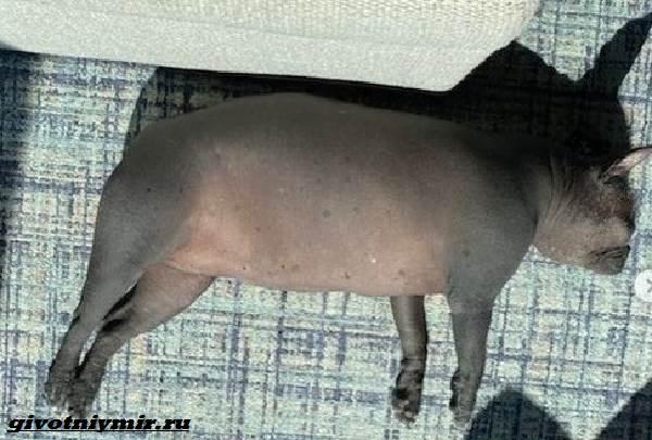 История-о-забавной-собаке-на-теле-которой-нет-шерсти-4