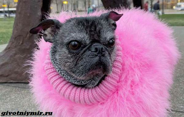 История-о-забавной-собаке-на-теле-которой-нет-шерсти-5