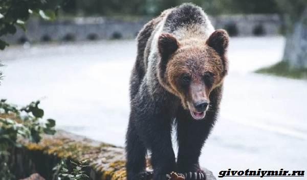 Две-истории-о-том-как-отважной-девушке-и-собакам-удалось-прогнать-медведей-1