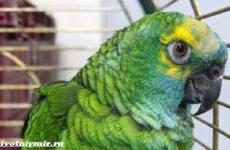 Две истории о забавных попугаях, которые воруют бриллианты и толстеют от вредной пищи