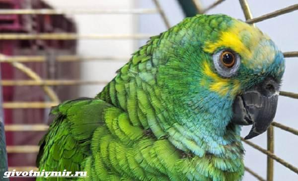 Две-истории-о-забавных-попугаях-которые-воруют-бриллианты-и-толстеют-от-вредной-пищи-1