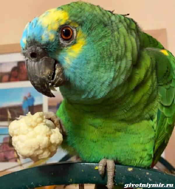 Две-истории-о-забавных-попугаях-которые-воруют-бриллианты-и-толстеют-от-вредной-пищи-5