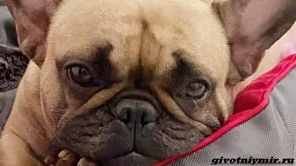 Истории-о-похищенных-собаках-которых-с-трудом-удалось-вернуть-4