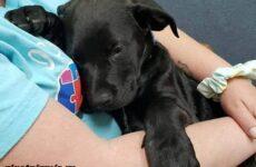 История о больном щенке, которого спасала вся страна