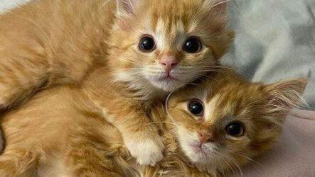 История о двух котятах-близнецах, которых удалось спасти от одиночества
