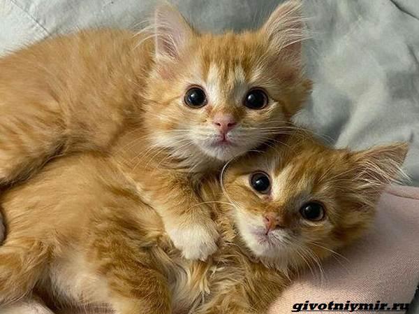 История-о-двух-котятах-близнецах-которых-удалось-спасти-от-одиночества-1