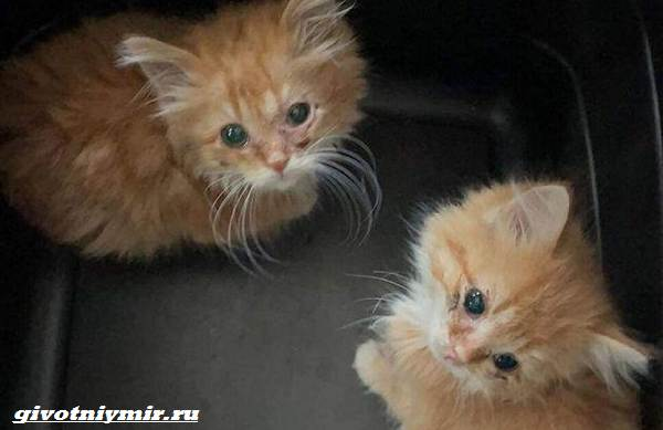 История-о-двух-котятах-близнецах-которых-удалось-спасти-от-одиночества-2