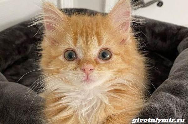 История-о-двух-котятах-близнецах-которых-удалось-спасти-от-одиночества-4