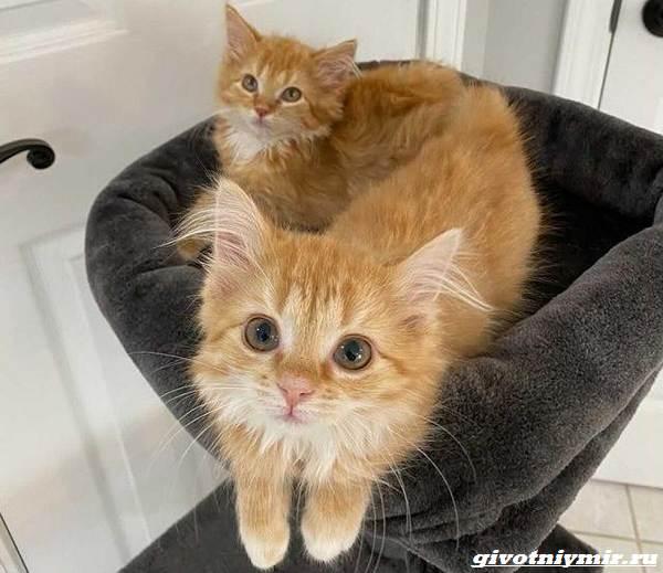 История-о-двух-котятах-близнецах-которых-удалось-спасти-от-одиночества-5