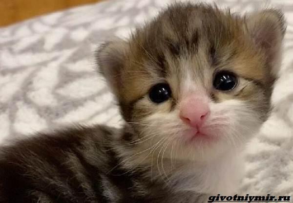 История-о-котенке-который-умеет-сидеть-как-кенгуру-2