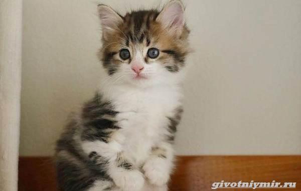 История-о-котенке-который-умеет-сидеть-как-кенгуру-3