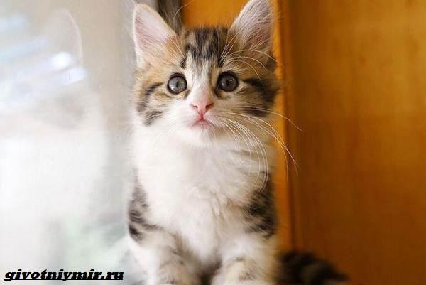 История-о-котенке-который-умеет-сидеть-как-кенгуру-4