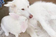История о крепкой дружбе собаки и крольчихи
