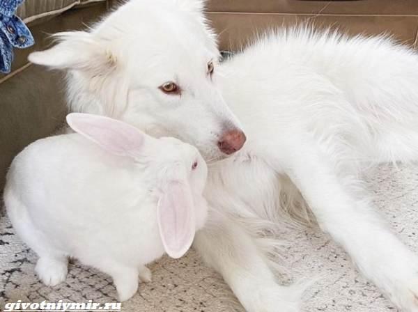 История-о-крепкой-дружбе-собаки-и-крольчихи-1