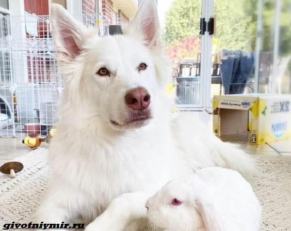 История-о-крепкой-дружбе-собаки-и-крольчихи-4