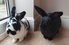 История о кроликах-разрушителях, которые портят хозяйские вещи