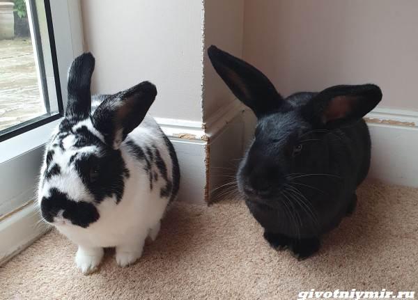История-о-кроликах-разрушителях-которые-портят-хозяйские-вещи-1