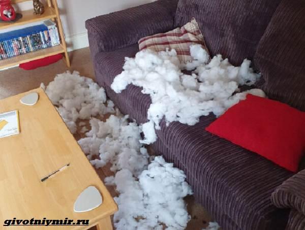 История-о-кроликах-разрушителях-которые-портят-хозяйские-вещи-2