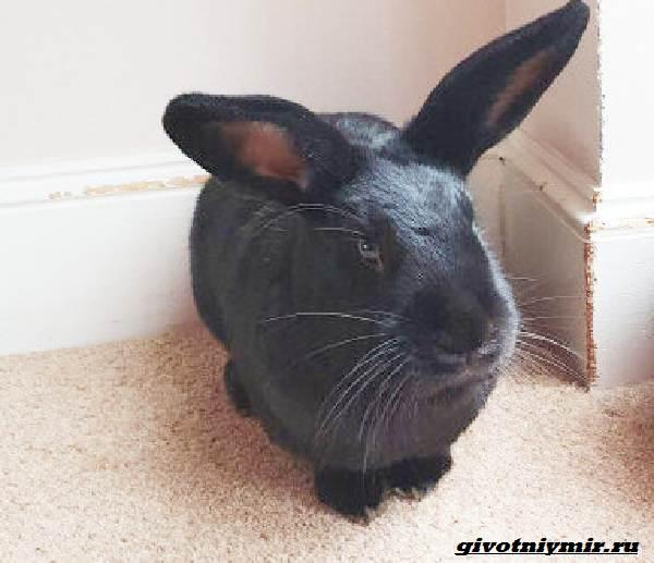 История-о-кроликах-разрушителях-которые-портят-хозяйские-вещи-3